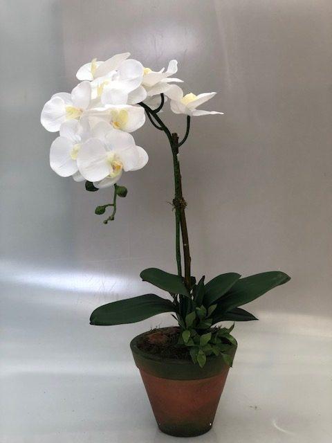 I8238 - Orquídea phaleonopsis branca vaso barro - 60cm altura