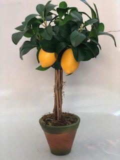 L197 - Àrv. limão peq. V. nº2 c/ patina - 50cm altura