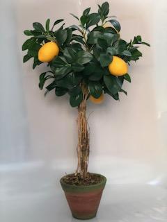 L198 - Àrv. limão méd. V. nº2 c/ patina - 77cm altura