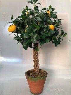 L199 - Àrv. limão gde v. nº6 c/ patina - 90cm altura