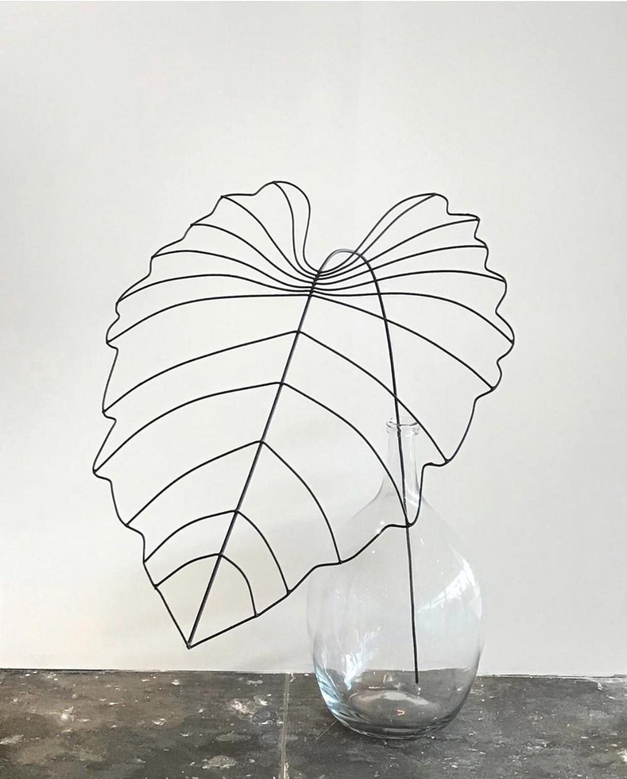 Folha Orelha de Elefante Interior Design