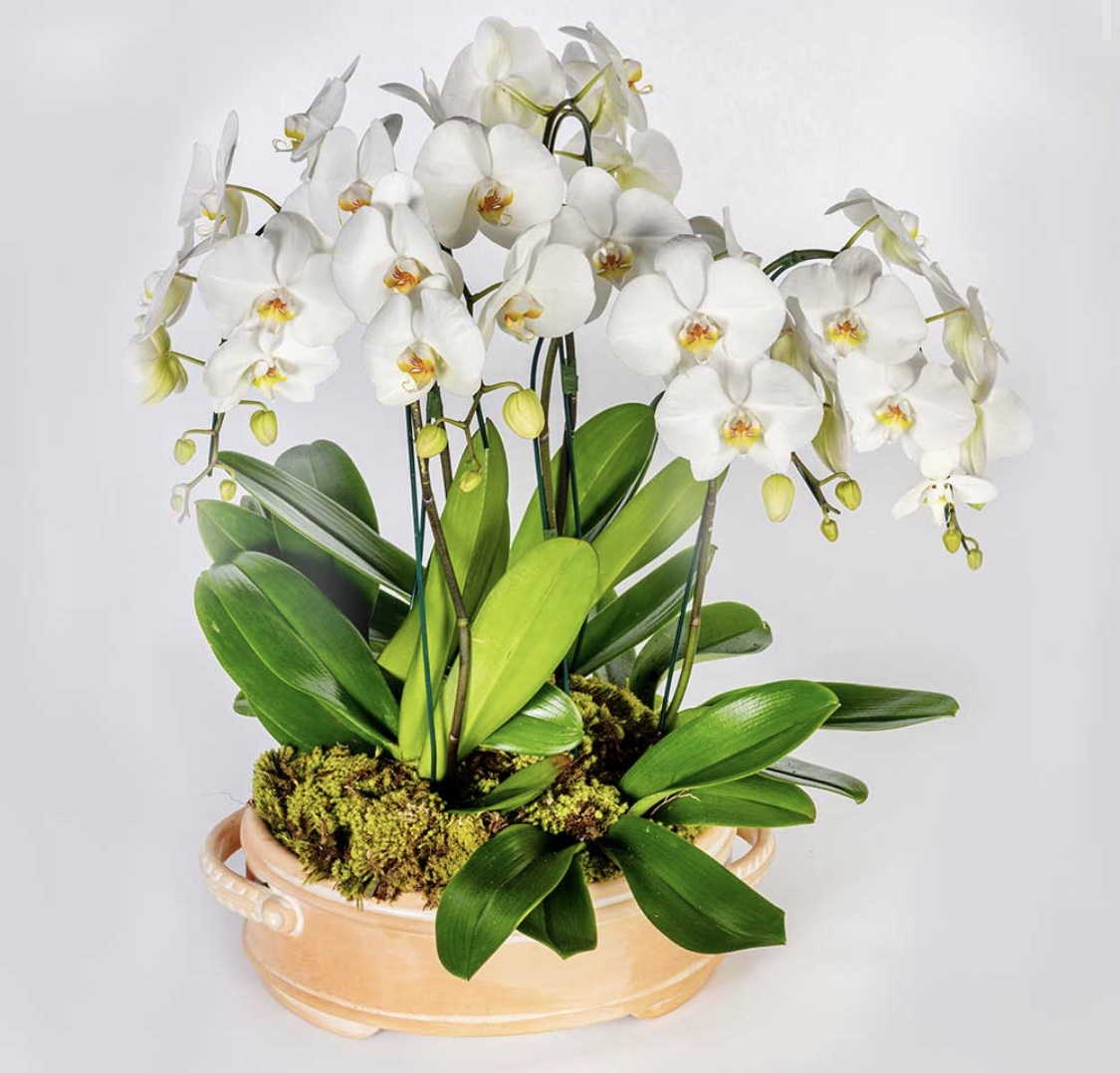 Floreira Oval Terracota